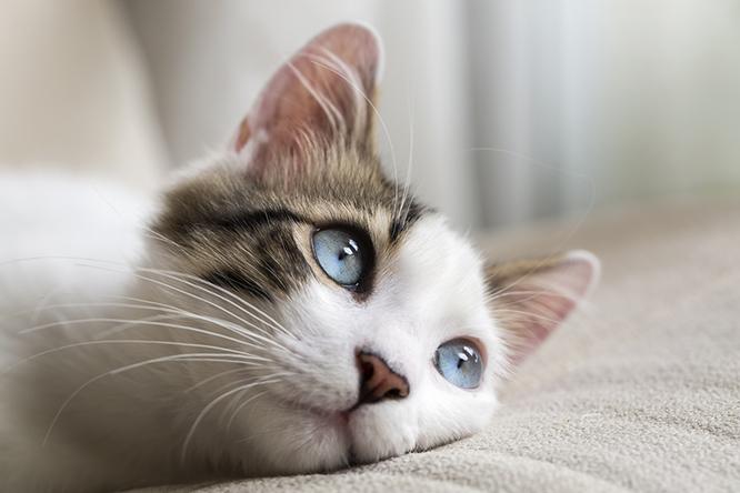入居すると猫が付いてくる「猫付マンション」とは?