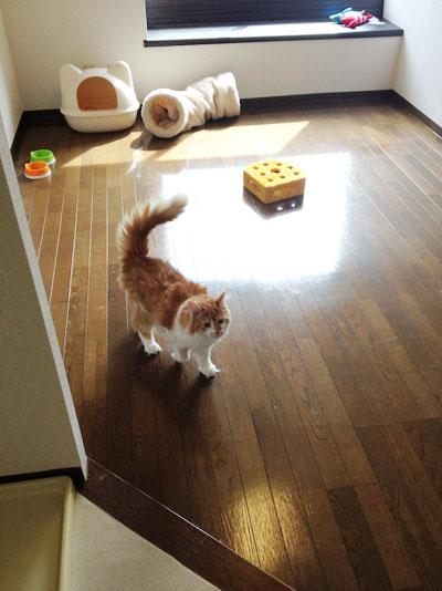 猫OK物件の不足と賃貸住宅の空室率問題