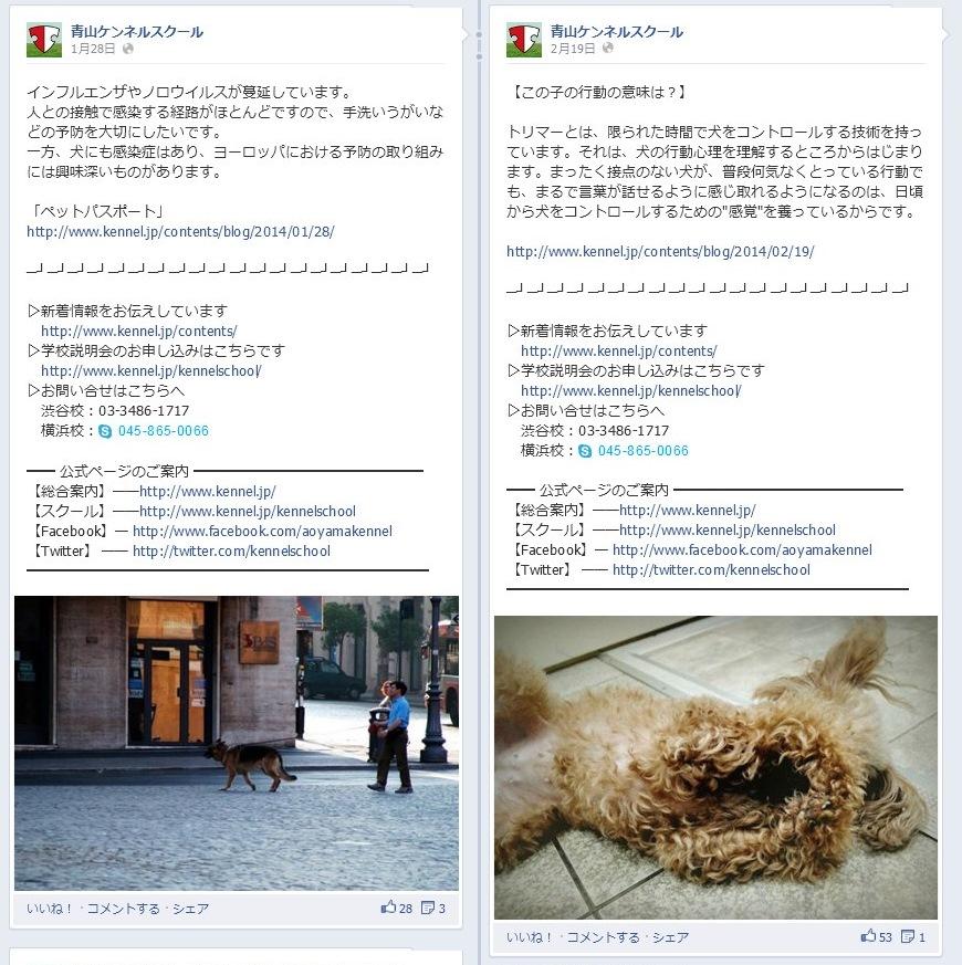 青山ケンネルスクール Facebook事例004