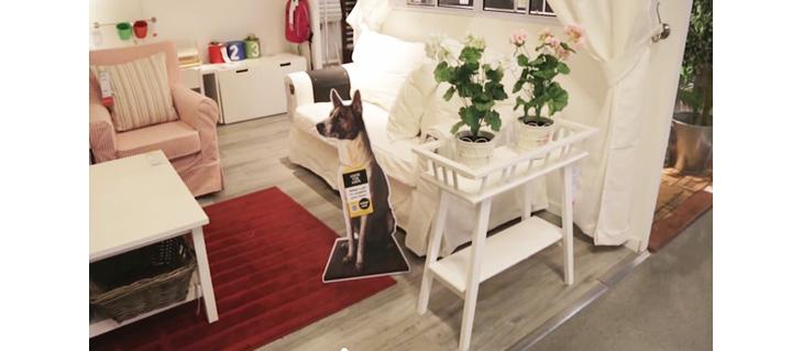 IKEA,イケア,チャリティイベント,犬,里親,コラボ