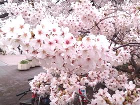 春らんまん♪の画像