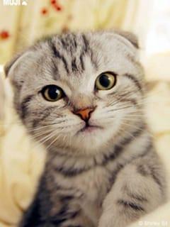 猫店長さん