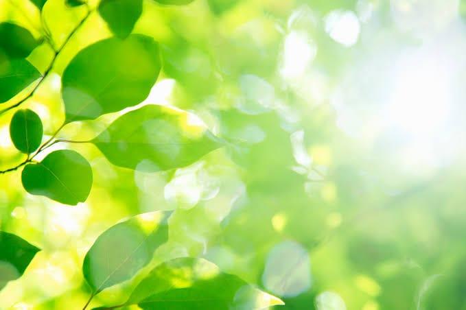 一緒に働いてくれるセラピストさん大募集!! la vert (ラ・ヴェール)の求人ブログ