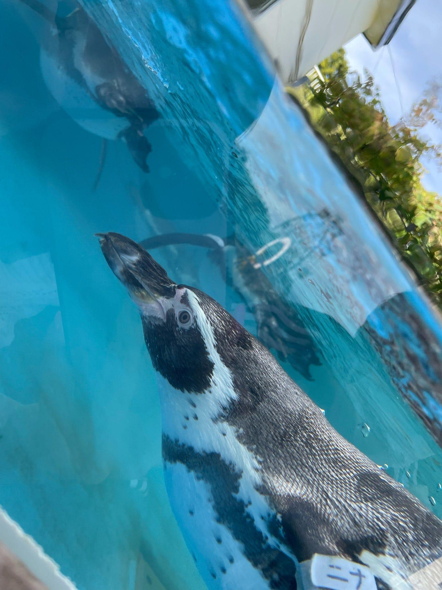 水族館☆ R projectの求人ブログ