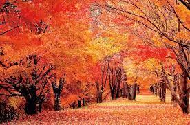 〇〇の秋といえば何!? アラジンの求人ブログ