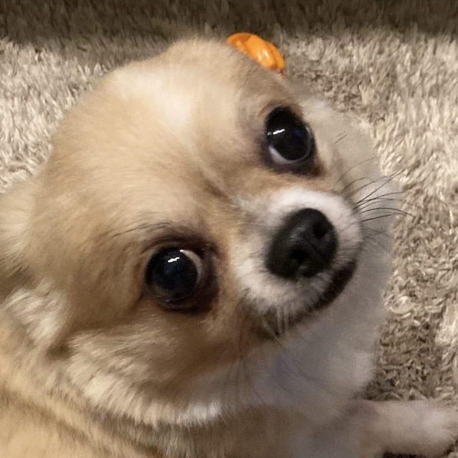 トトロ似店長★【関西弁のおもしろ店長♪】 | TOTORO~トトロ~(福岡市・博多)