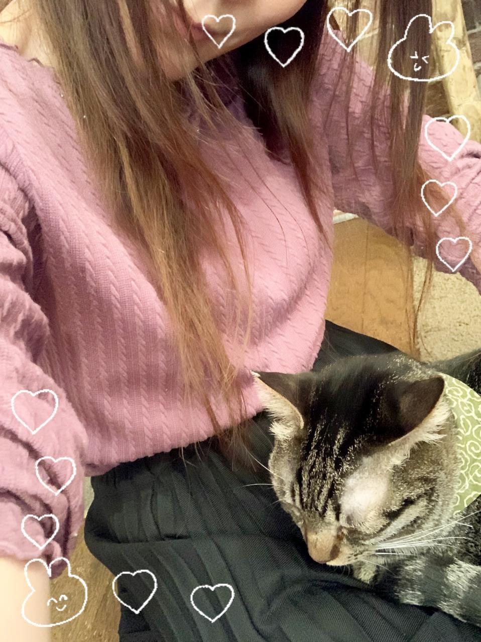 ねいろ「?ネコカフェにて…?」11/28(土) 08:26 | ねいろの写メ・風俗動画