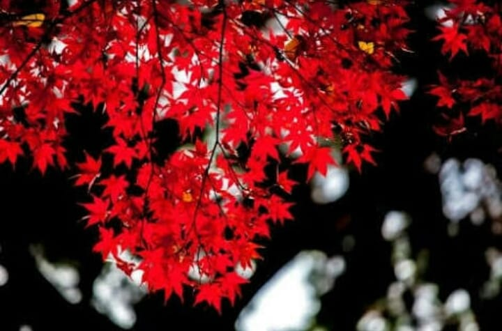 「はなの定休日」11/20(月) 15:26 | ド淫乱エロエロ妻 はなの写メ・風俗動画