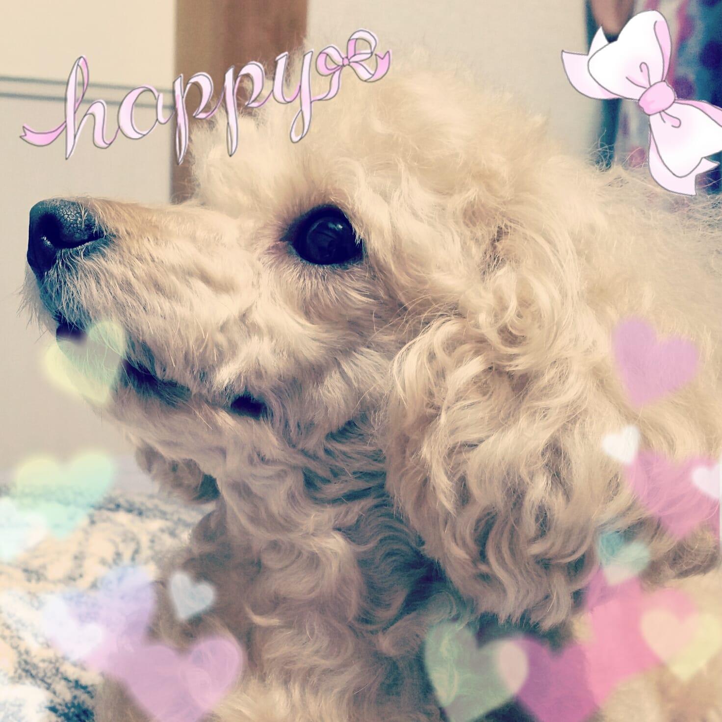 理香子(りかこ)「こんばんわ✨」11/23(木) 19:51   理香子(りかこ)の写メ・風俗動画