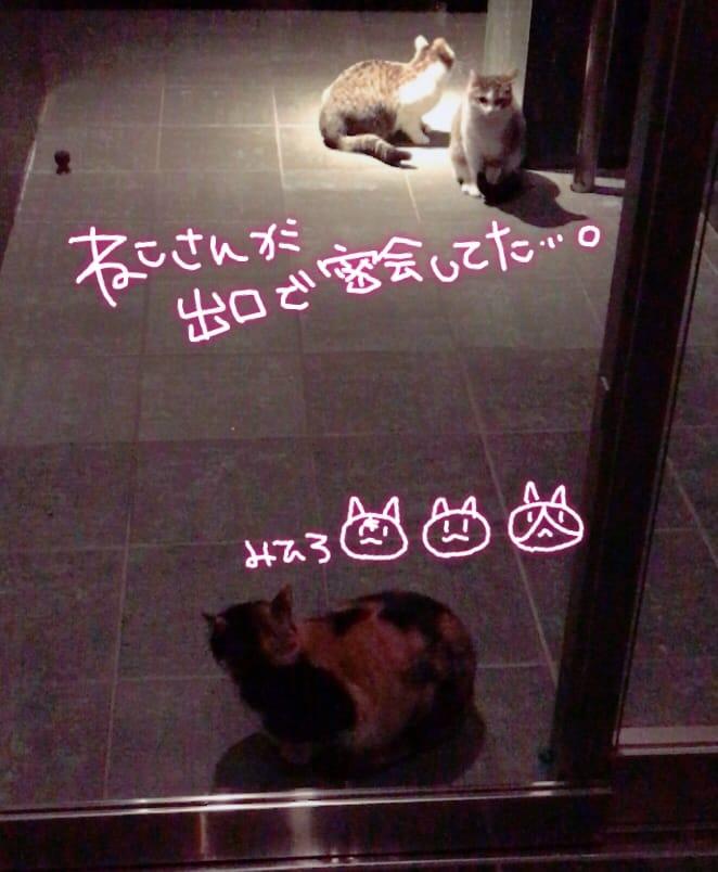 ミヒロ「ねこさん…」12/15(金) 03:29 | ミヒロの写メ・風俗動画