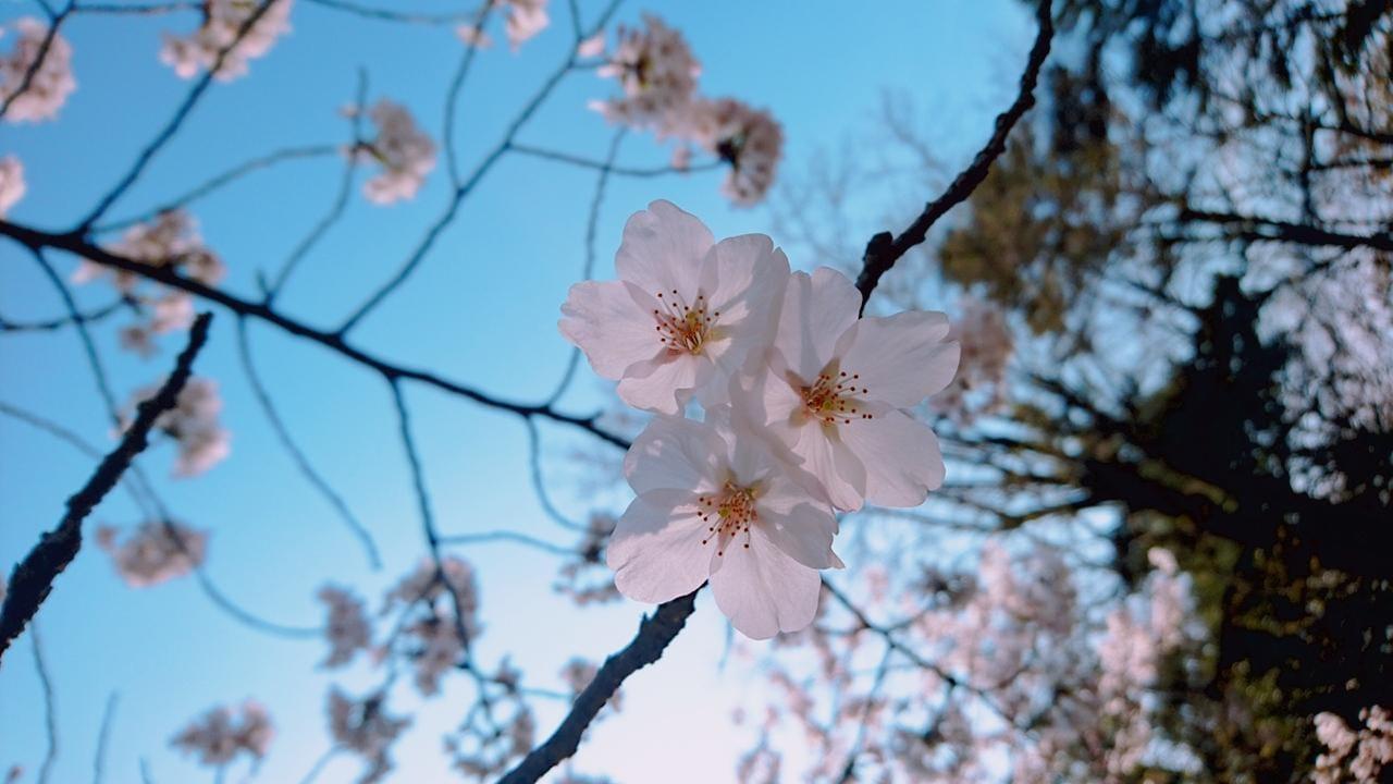 「ありがとうございました(*´ェ`*)」03/28(日) 17:19 | あおいの写メ・風俗動画