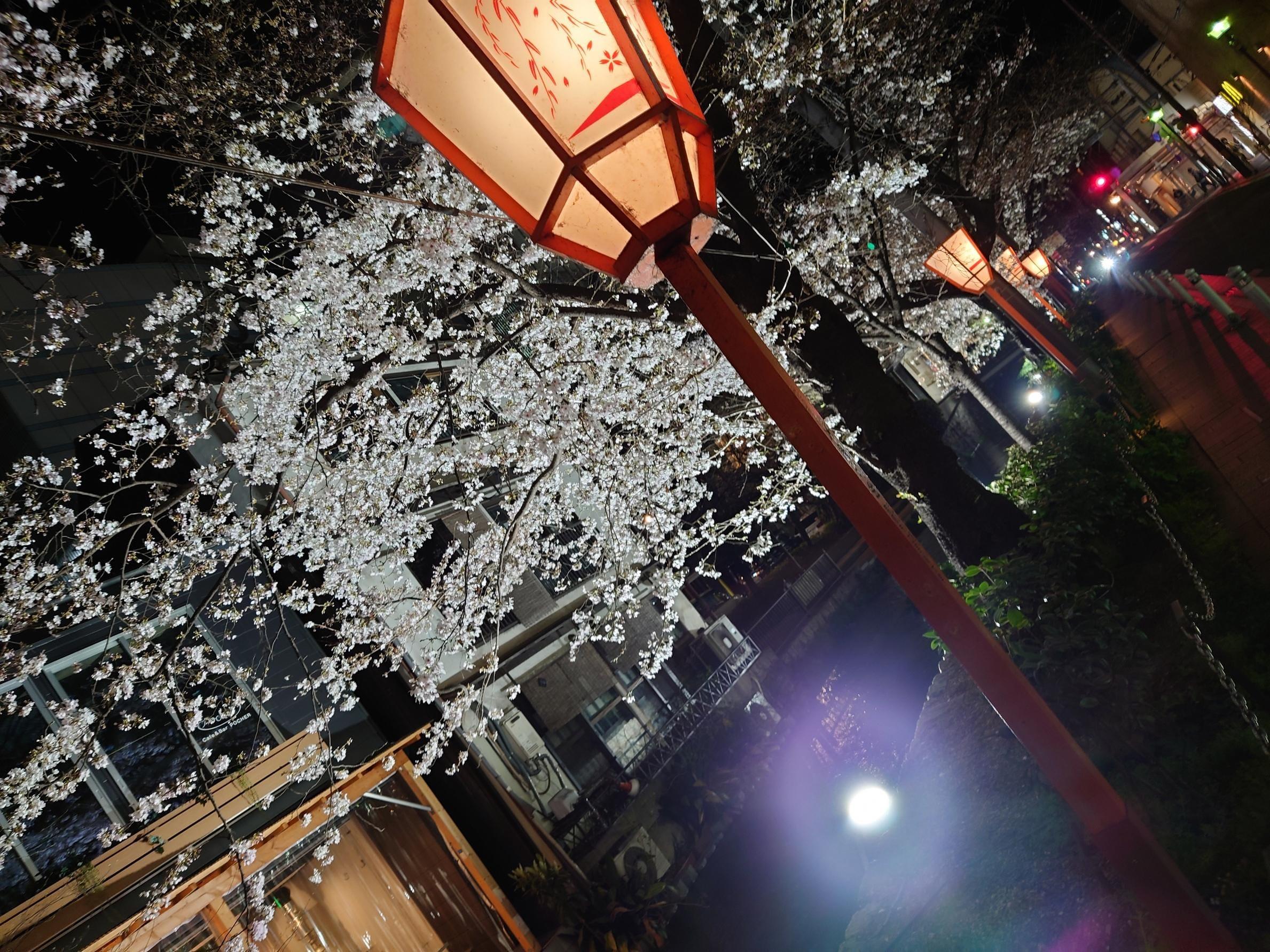 「さくら」04/01(木) 21:34 | もも(秘密)の写メ・風俗動画