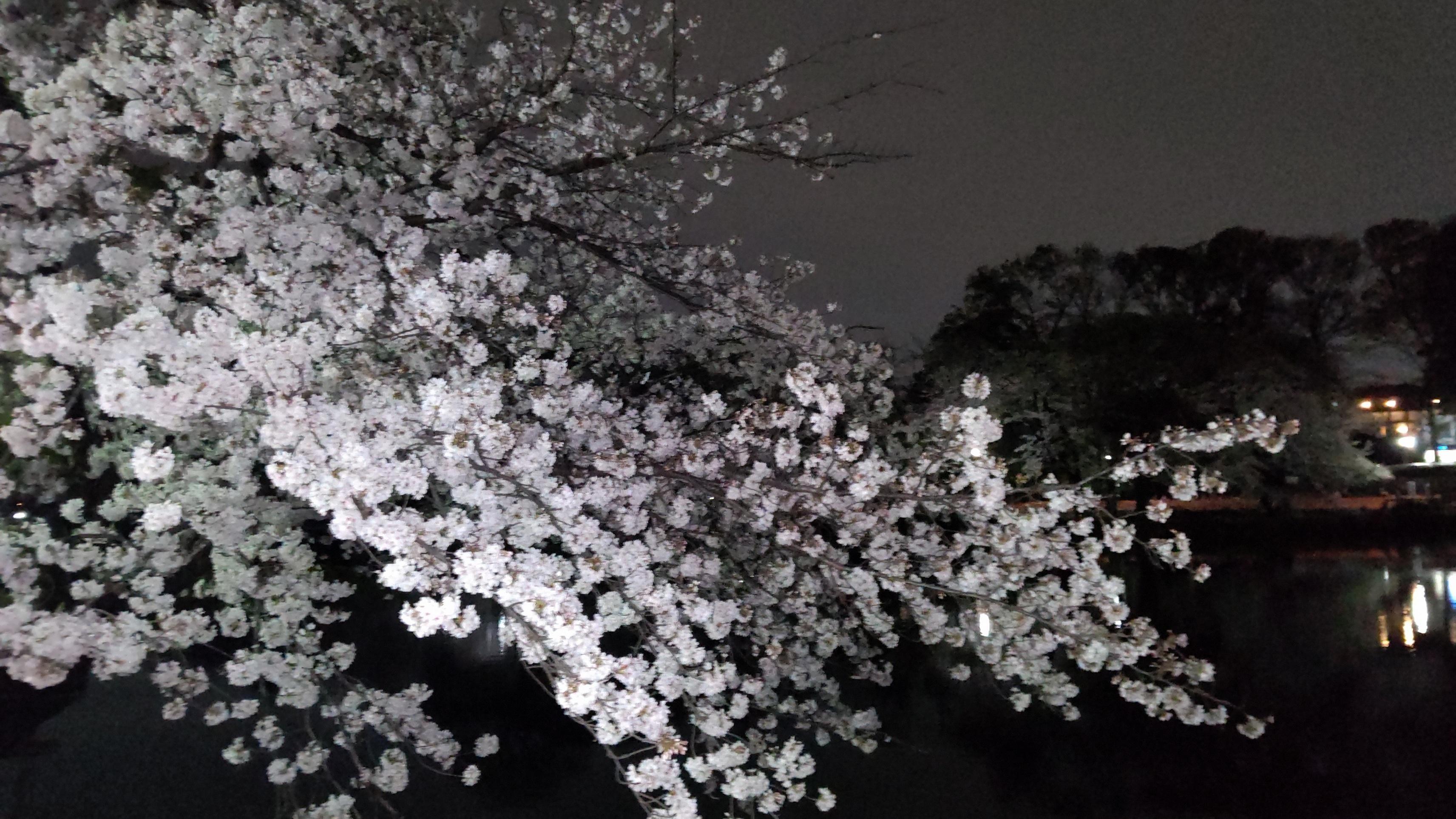 「しのぶの好きな花」04/23(金) 16:28   しのぶの写メ・風俗動画