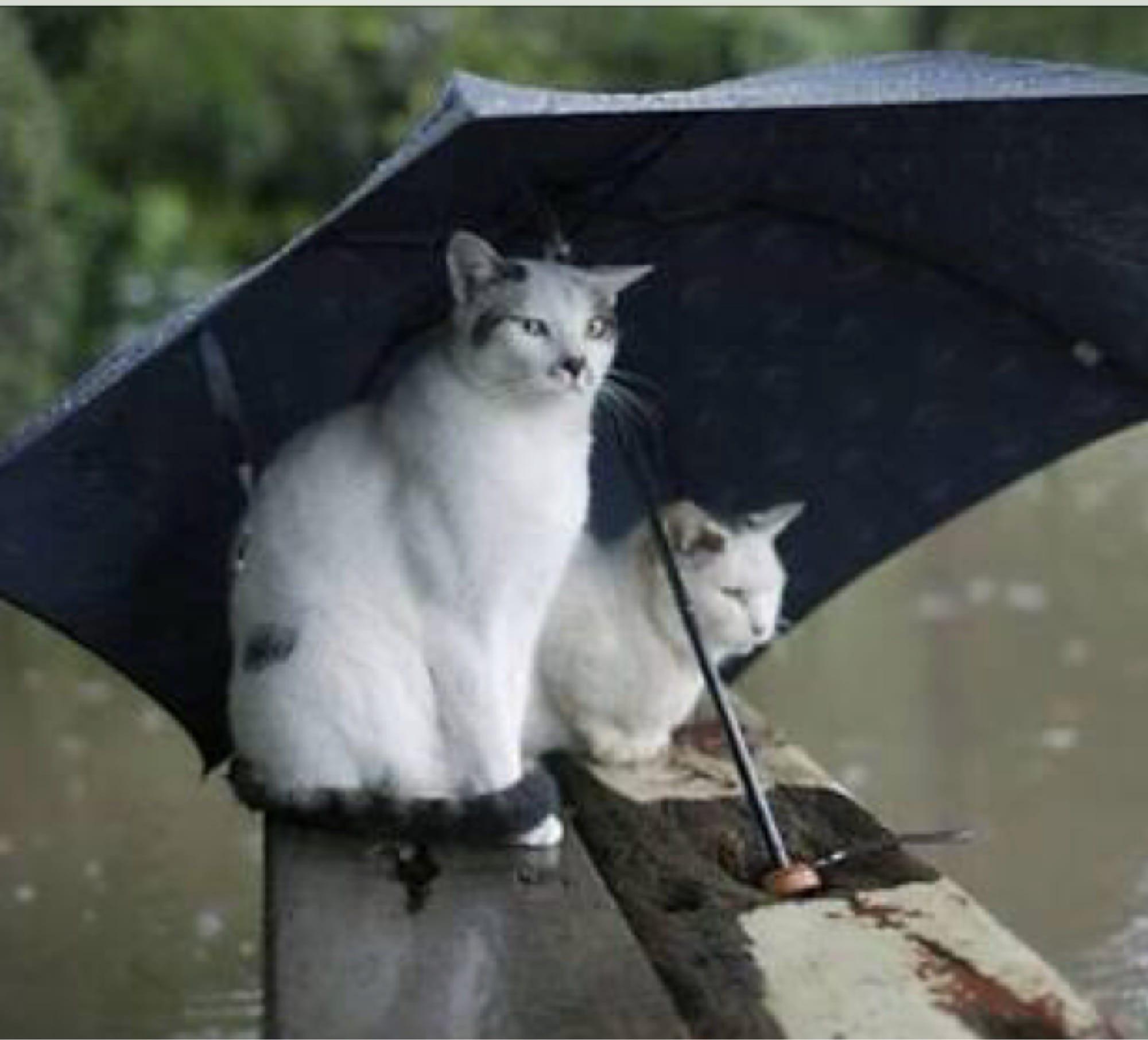 Ayase(あやせ)「傘すら」01/17(水) 10:37   Ayase(あやせ)の写メ・風俗動画
