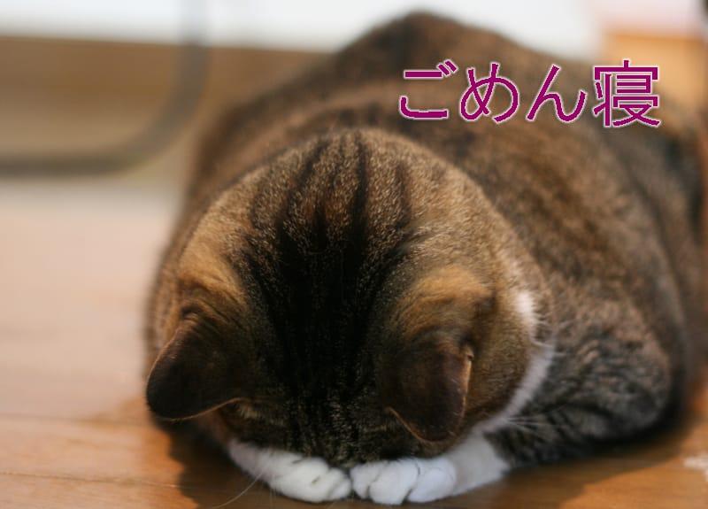 楠田紘子「お詫び」01/19(金) 22:02 | 楠田紘子の写メ・風俗動画