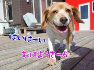 「おはようございます♪」01/21(日) 08:08 | 美怜の写メ・風俗動画