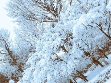 つぼみ「[お題]from:こんこんさん」01/23(火) 15:30 | つぼみの写メ・風俗動画