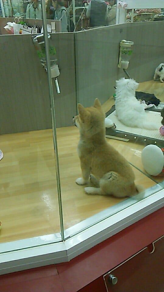 「柴犬」01/24(水) 02:55   らら先生の写メ・風俗動画