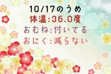 「かぜつよー!!!!!」10/17(日) 10:55   うめの写メ