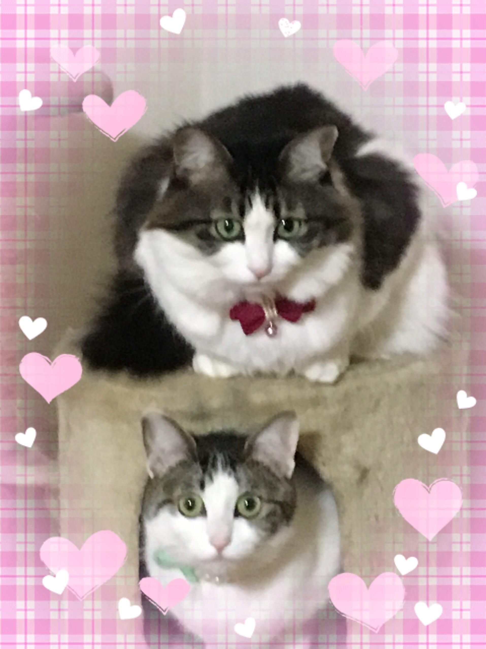 ゆうか「2月22日    にゃんにゃん  猫の日」02/22(木) 07:46 | ゆうかの写メ・風俗動画
