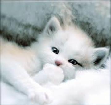 白井まりあ【プレミアム】「にゃんにゃん❤猫の日よー」02/22(木) 12:40 | 白井まりあ【プレミアム】の写メ・風俗動画