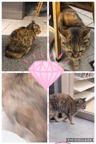 れあ「魅惑の猫ルーム?」02/23(金) 05:35 | れあの写メ・風俗動画