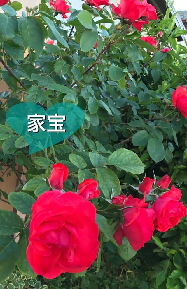 「では、10時間後に。o(^-^)o」03/06(火) 01:34 | 家宝の写メ・風俗動画