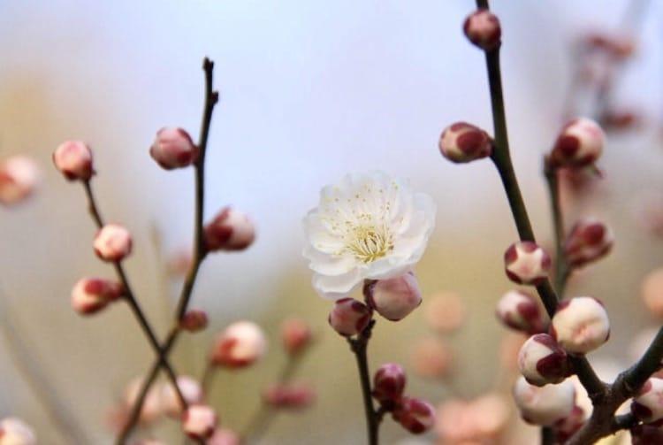 「春ひらく」03/13日(火) 16:28   二宮和香の写メ・風俗動画