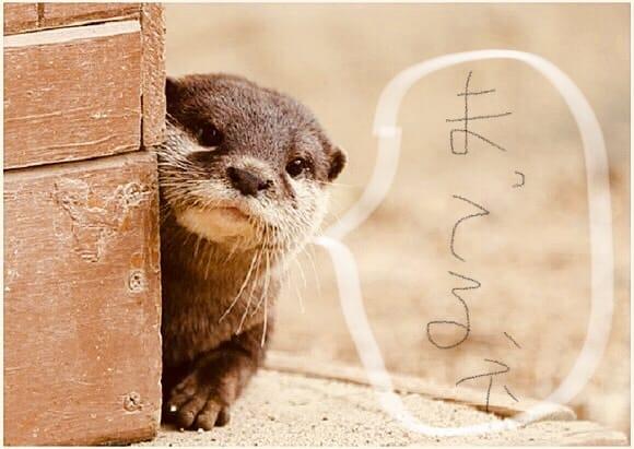 「( 。´◕ω◕)y─┛ணこんばんゎ♪」03/14(水) 23:03   マリの写メ・風俗動画