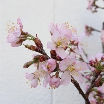 「お礼♡」03/15(木) 02:25   のあの写メ・風俗動画