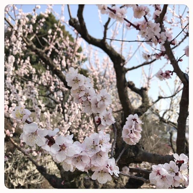 ゆうか「こんばんはʚ♡⃛ɞ(ू•ᴗ•ू❁)」03/15(木) 19:44   ゆうかの写メ・風俗動画