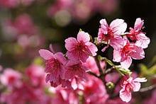 「定期。」03/17(土) 18:58 | 美月 桜の写メ・風俗動画