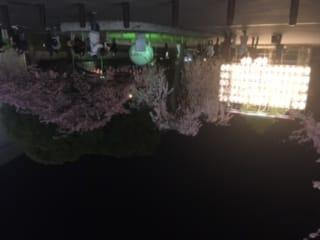 「桜」03/17(土) 22:49 | ひなの写メ・風俗動画