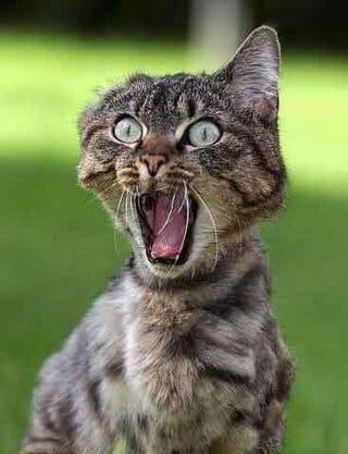 ねこ「知らんオッさんに追いかけられる猫」03/19(月) 18:08   ねこの写メ・風俗動画