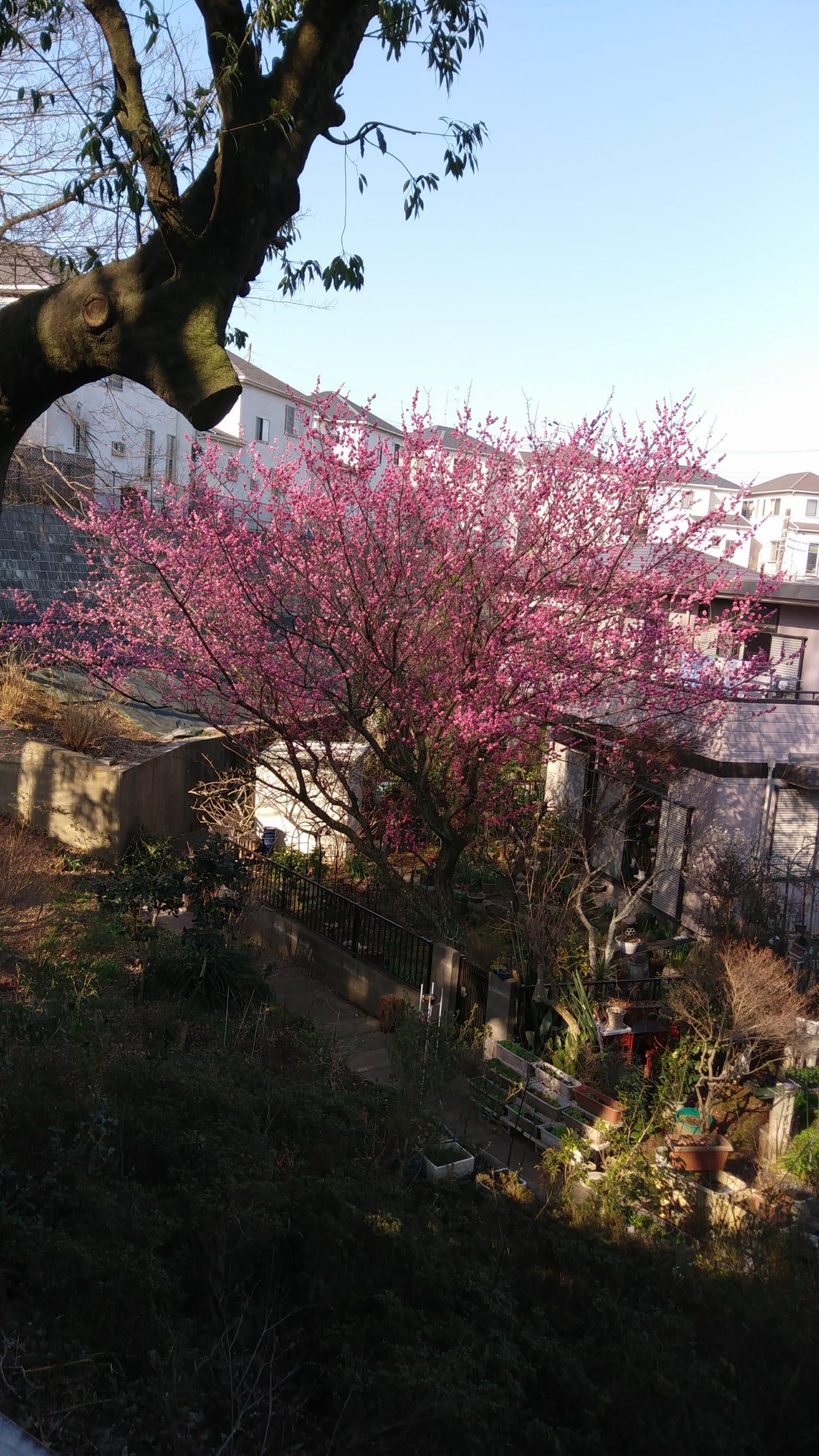 「おはようございます」03/20日(火) 09:11 | ゆみこの写メ・風俗動画