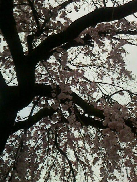 まいこ「23日 K様」03/23(金) 16:45 | まいこの写メ・風俗動画