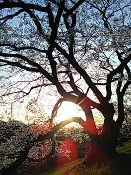 れいこ「突然ですが」03/23(金) 19:42 | れいこの写メ・風俗動画