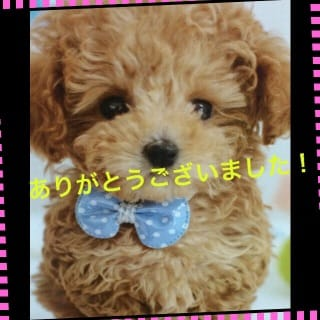 すみれ「お誘いありがとうございました(o^^o)」03/24(土) 00:01   すみれの写メ・風俗動画