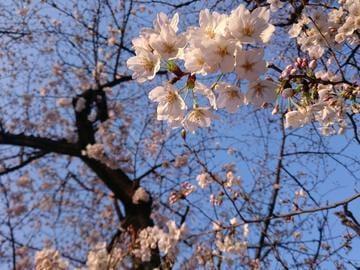「13時から出勤!」03/25(日) 00:03 | ゆきみの写メ・風俗動画