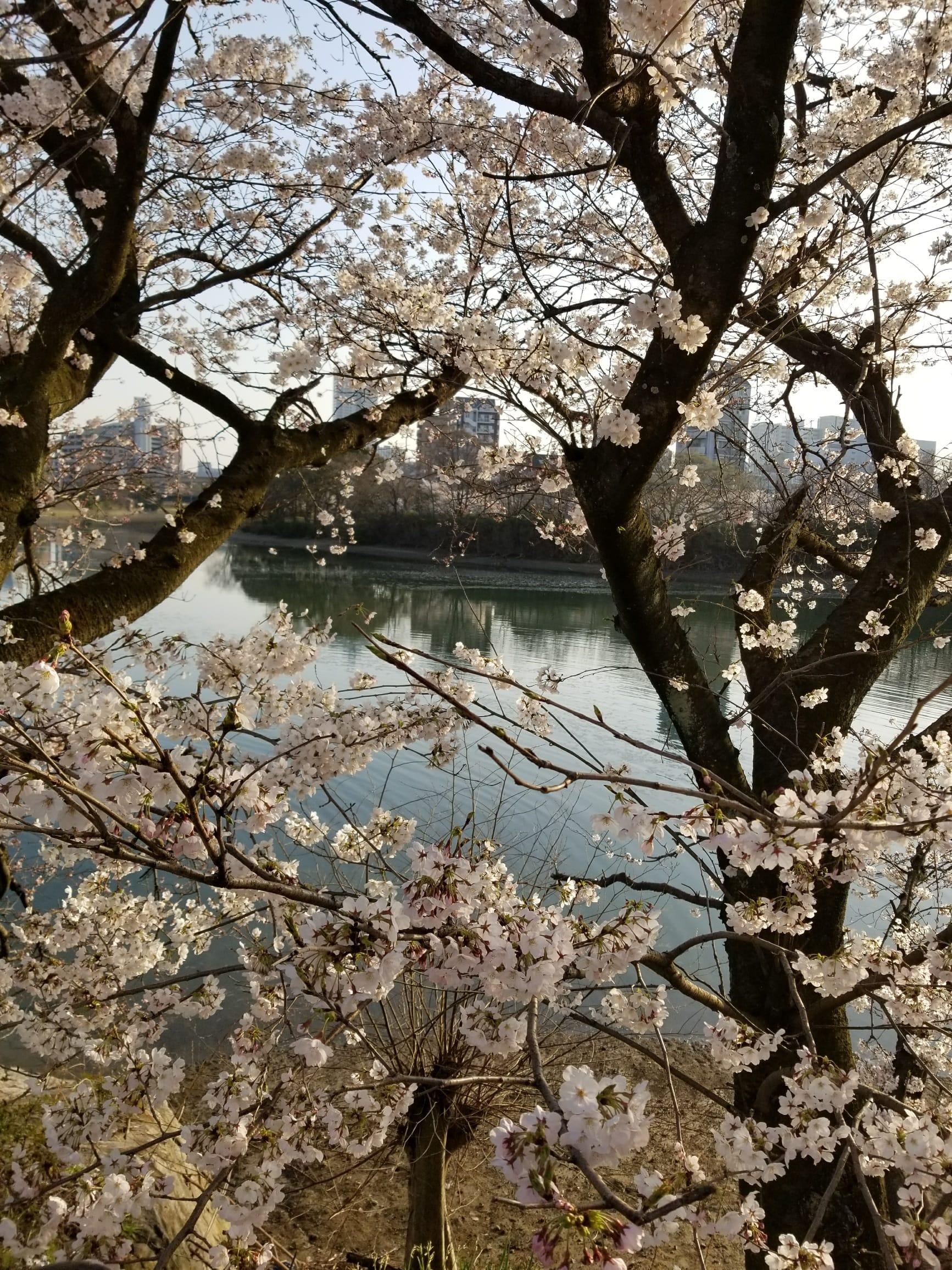 「広島便り」03/28(水) 18:44 | 優馬の写メ・風俗動画