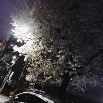 「こんにちわ٩(๑❛ᴗ❛๑)۶」04/06(金) 13:25   ゆんの写メ・風俗動画