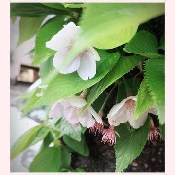 成宮「新緑の候」04/15(日) 15:12 | 成宮の写メ・風俗動画