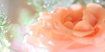 「(o´罒`o)ニヒヒ♡」04/16(月) 13:16 | ★☆保坂あみ☆★の写メ・風俗動画