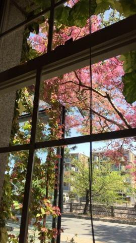 「大月勇幸」04/16(月) 15:24 | 百瀬 愛華の写メ・風俗動画