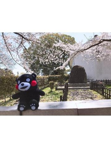 「桜が恋しい〜」04/16(月) 21:19 | ことの【超絶ハイレベル美女】の写メ・風俗動画