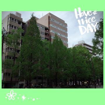 成宮「新緑の候(2)」04/18(水) 22:12 | 成宮の写メ・風俗動画