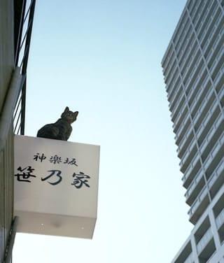 「新調( ͡° ͜ʖ ͡°)かな」04/21(土) 10:09 | 小川(おがわ)の写メ・風俗動画