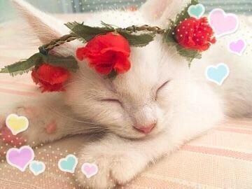 浅井 涼花「おやすみなさい?」04/23(月) 23:30 | 浅井 涼花の写メ・風俗動画