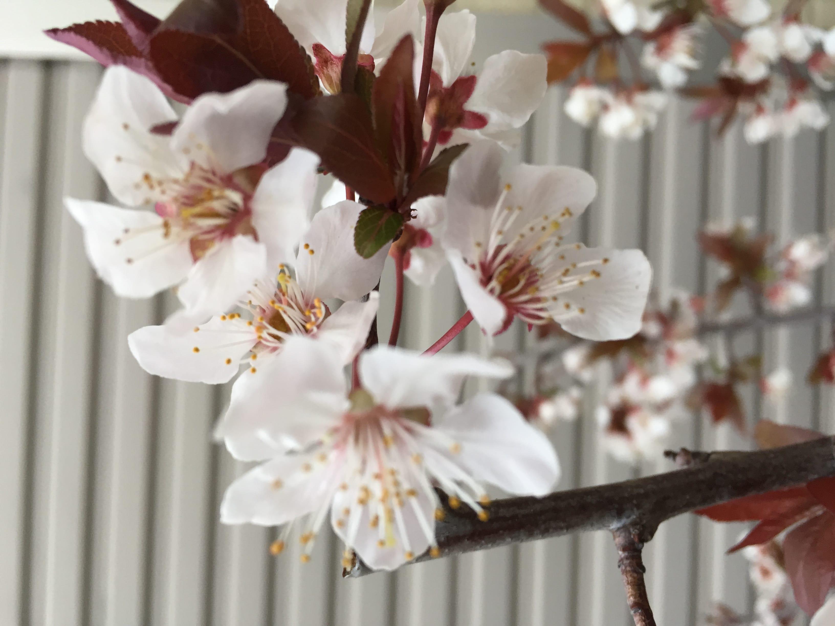 「今日の、ありがとうございま」04/24(火) 22:25 | 牧野かほの写メ・風俗動画