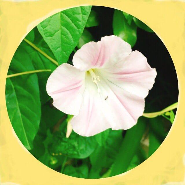 「おはようございます」05/18(金) 10:30 | まきの写メ・風俗動画